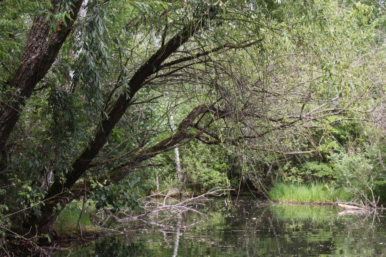 Ein neu geschaffener, wilder Naturraum mit Fluss im Écomusée d'Alsace.