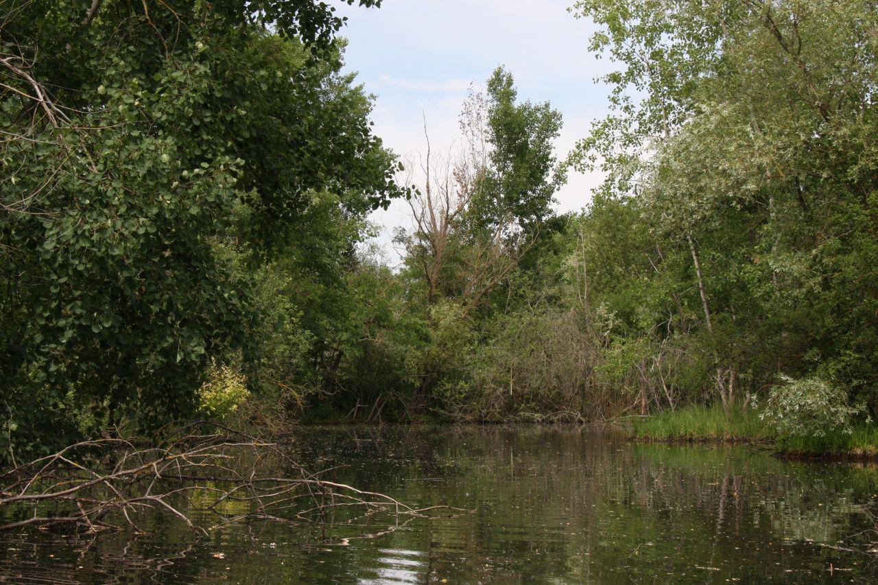 Ein neu geschaffener, wilder Naturraum mit Fluss im Écomusée d'Alsace