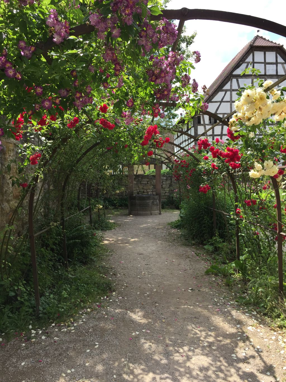 Rosenspalier im Garten des Befestigungsturms aus Mulhouse im Écomusée d'Alsace