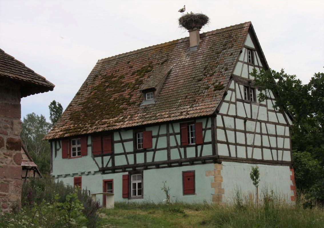 Das grüne Winzerhaus von Wettolsheim mit besetztem Storchennest auf dem Dach im Écomusée d'Alsace.