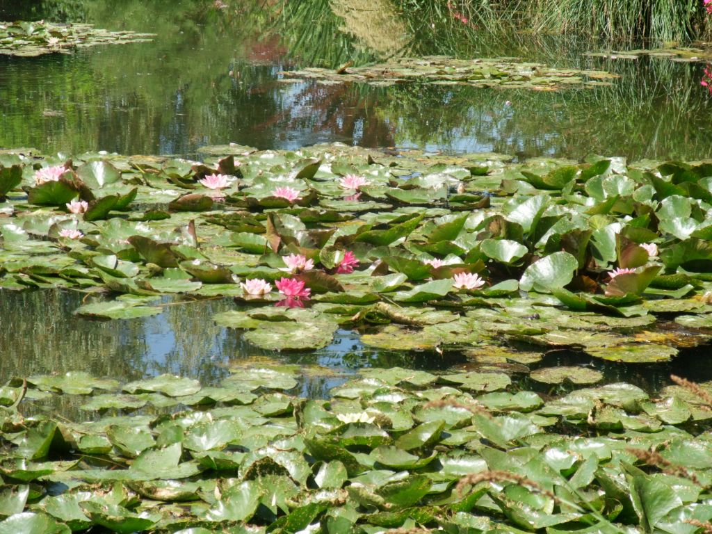 Seerosenteich in Monet's Garten in Giverny, Frankreich