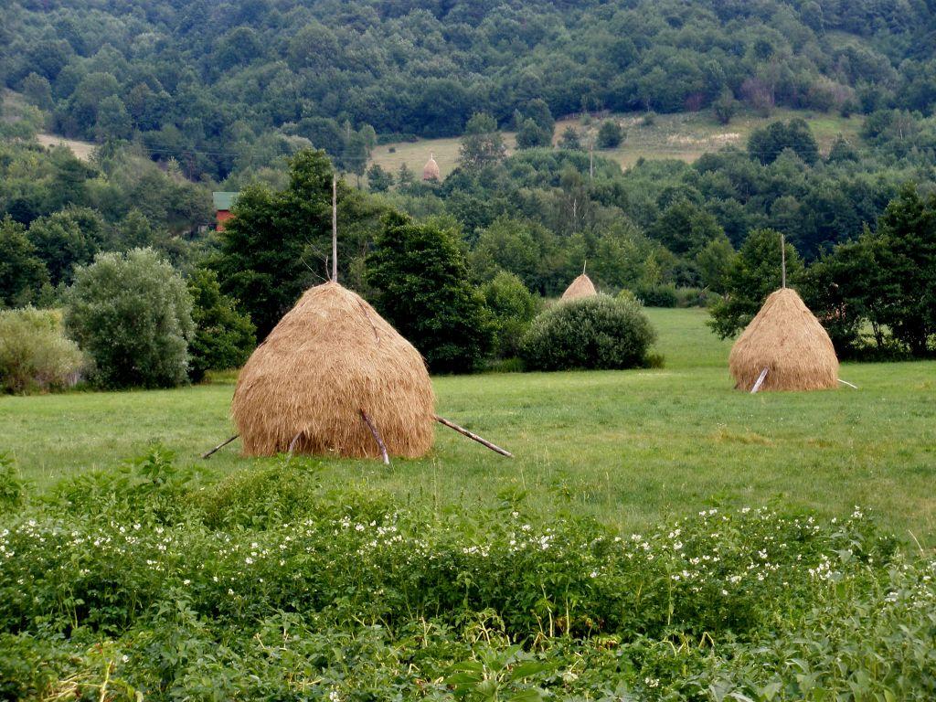 typische Heuhaufen in Siebenbuergen, Rumaenien
