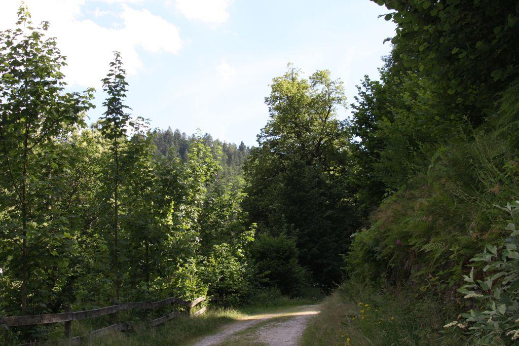 Wanderweg Sagenrundweg bei den Allerheiligen Wasserfaellen im Schwarzwald