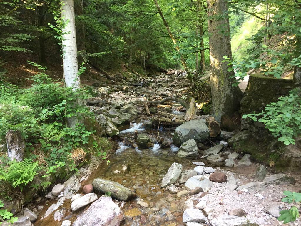 Lierbach mit wenig Wasser im Schwarzwald
